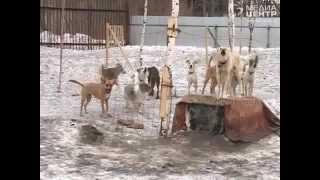 Бродячих собак и кошек в Вологде будут уничтожать