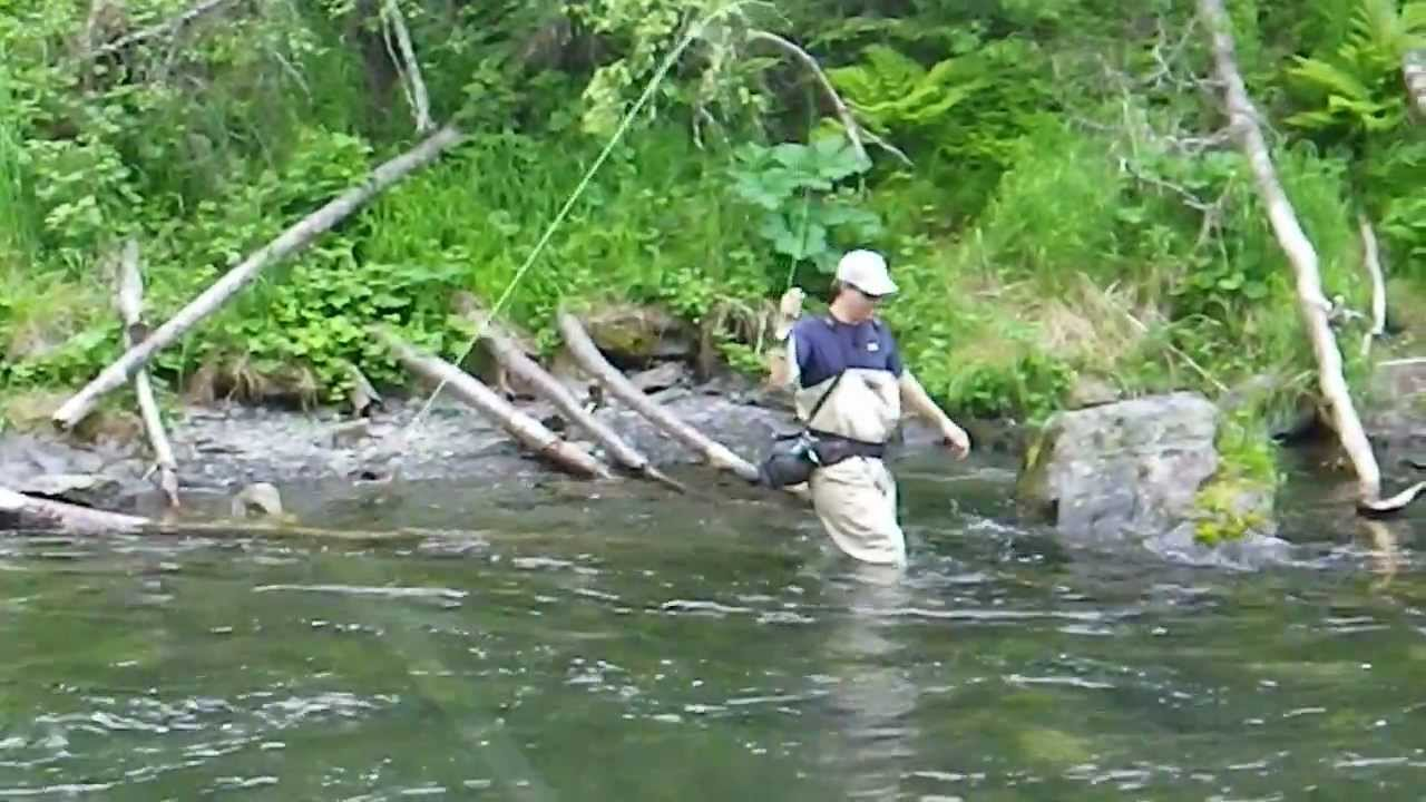 Salmon fishing alaska russian river falls sockeye salmon for Russian river fishing
