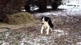 Bartolovi Dvori Pups