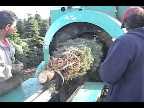 Christmas Tree Bailer