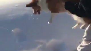 ¿Tiran a perro desde helicóptero?