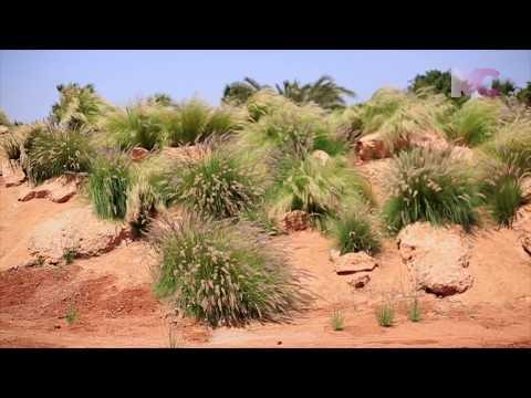 LE 1ER PARC À CROCODILES AU MAROC © MAGAZINE COM