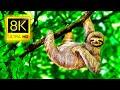 8K Amazing Animal Collection 8K ULTRA HD • موسيقى هادئة ، حياة برية جميلة ، أصوات الطبيعة تلفزيون 8K