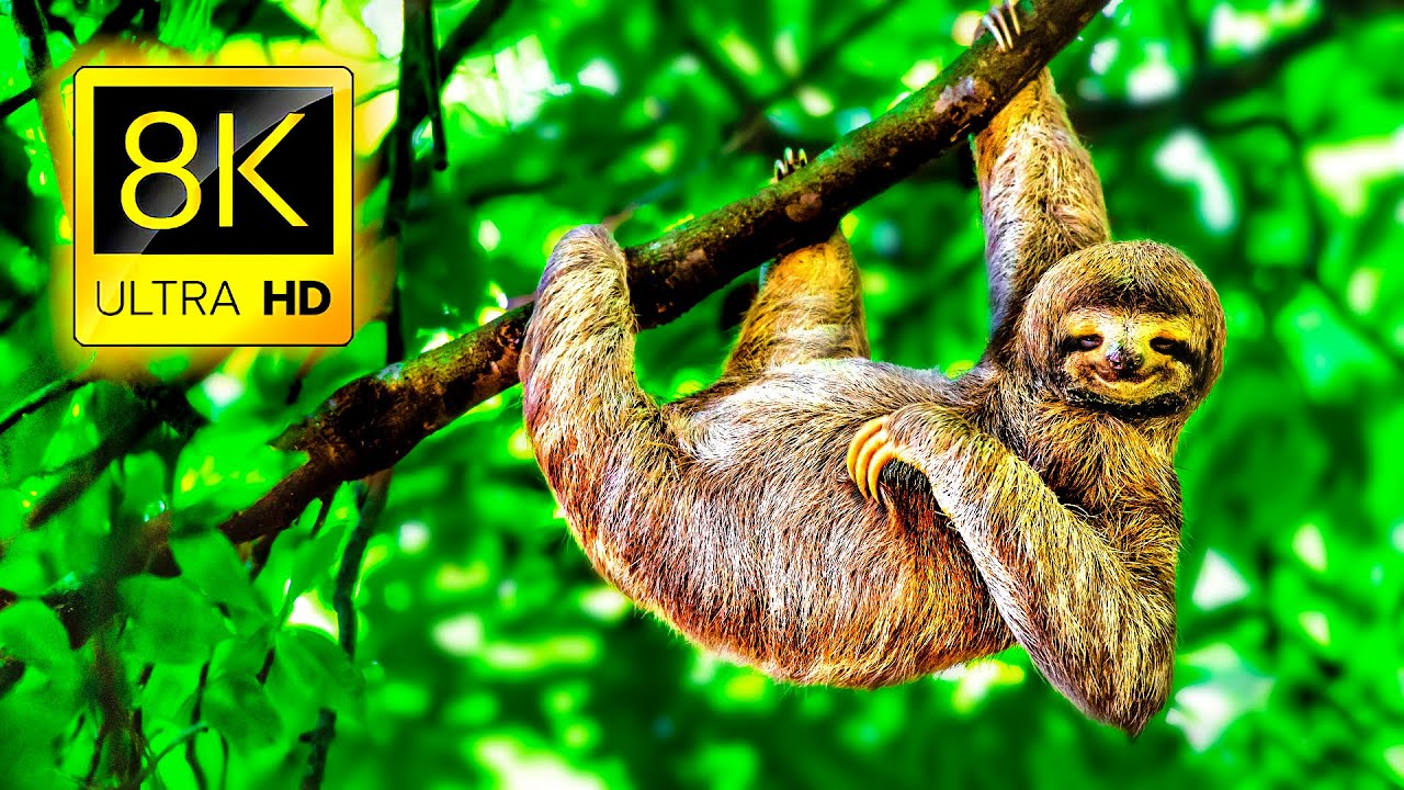 8K Amazing Animals Collection 8K ULTRA HD • Relaxing Music, Beautiful Wildlife, Nature Sounds 8K TV