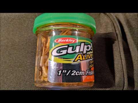 Berkley Gulp Fry : Test 1