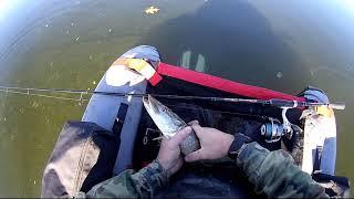 Łowne stare przynęty gumowe fishunter  konger shad