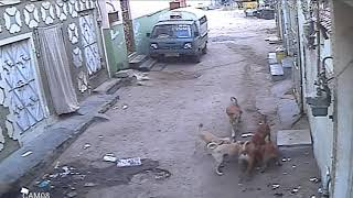 Stray Dog Saves Women From Man With A Knife