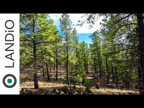 Land For Sale in New Mexico: 14.6 Wooded Mountain Acres Bordering National Forest