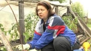 Фильм Зеленый сад № 106 от 19.05.2012г. г.Хабаровск