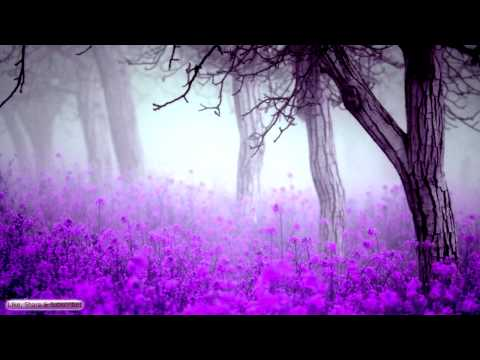 Best Sleep Music | Lavender Forest | Relaxing Music For Sleeping