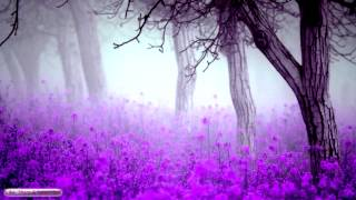 best sleep music   lavender forest   relaxing music for sleeping