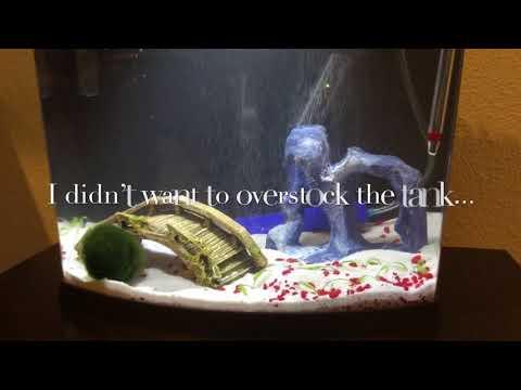 Top Fin Imagine 5 Gallon Betta Tank (Week One Fishless cycle)