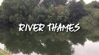 Underwater River Thames Runnymede Roach Perch Dace Skimmers