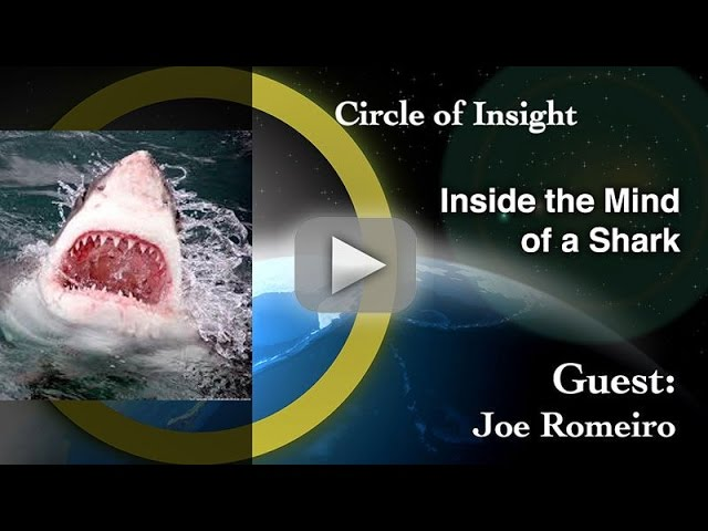 Inside the Mind of a Shark