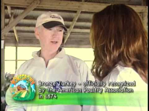 Visiting an organic Turkey Farm - Just in time for Thanksgiving!