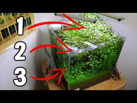 3 EASY Beginner Aquarium Plants For Your Planted Tank