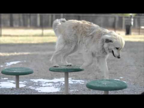 Bark Park / Dog Park Play Equipment
