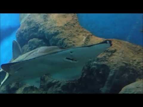 Aquarium Pattaya Underwater World Thailand