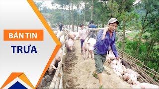Hải Dương: Nhiều người nuôi lợn chưa được cứu | VTC1