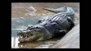 Die größten Tiere der welt !!!!!!