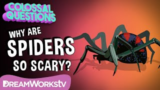 Why Are Spiders So Scary? | COLOSSAL QUESTIONS