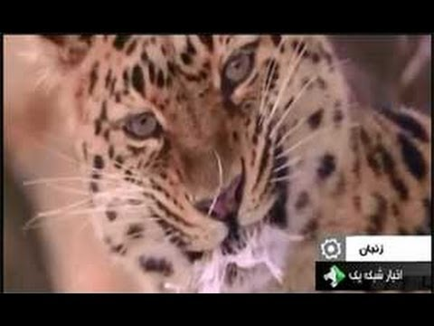 Iranian TV video about awareness for protection of wildlife in Iran