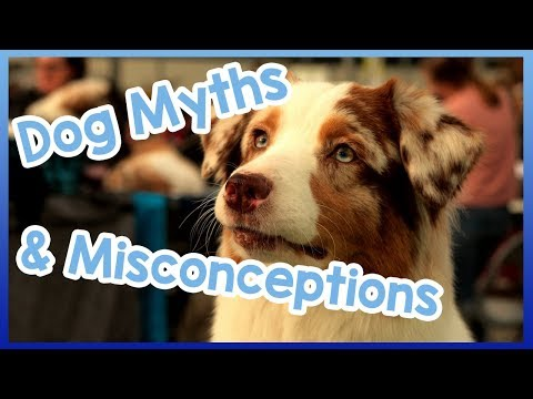 Common Myths and Misconceptions About Dogs Debunked!