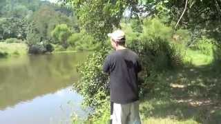 MONSTER Largemouth Bass 7 pounds lbs 24 inches - Virginia Farm Pond