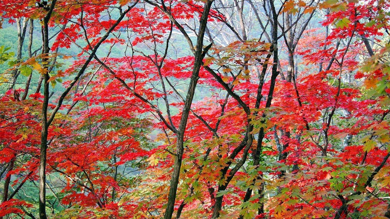 New Desktop Wallpaper Autumn Scenery In Ne China S Liaoning