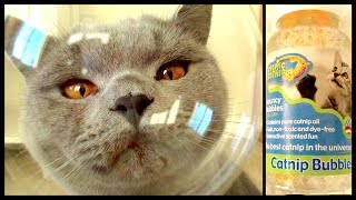 CATS & CATNIP BUBBLES! | CHRIS & EVE