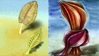 Развитие жизни на Земле (The Evolution of Life) - Рангея (Rangea schneiderhoehoni)