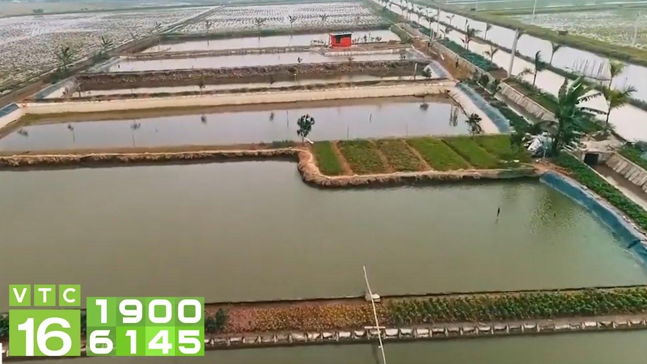 Trại cá giống công nghệ cao, sạch bệnh | VTC16