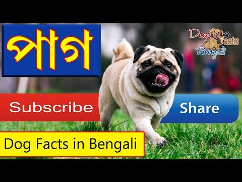 Pug dog facts in Bengali | Dog Facts Bengali | Popular Dogs