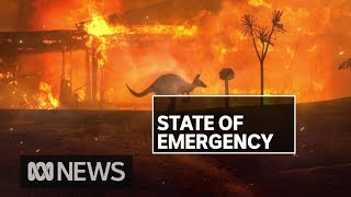 NSW Fires: Residents of Malua Bay and Rosedale assess damage | ABC News