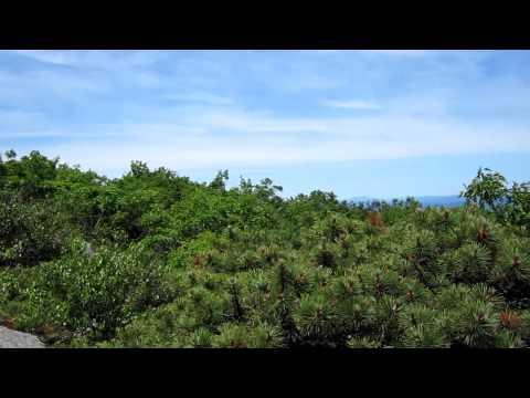The View From Mount Everett, Massachusetts