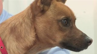How Detect Dog Skin Cancer