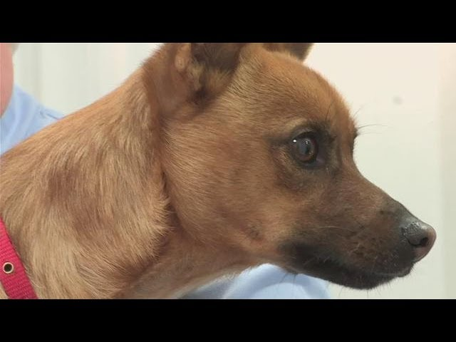 How To Detect Dog Skin Cancer Youtube