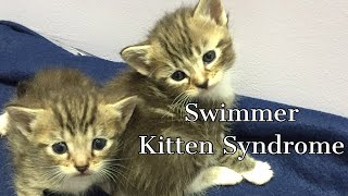 Swimmer Kitten Syndrome  Cured in less than two weeks