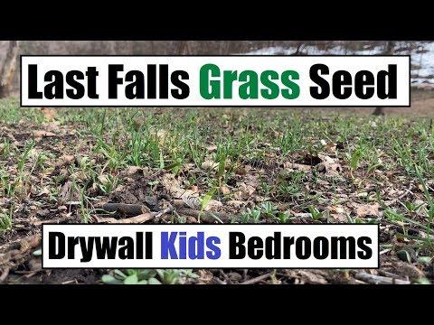 Last Years Grass Seed - Drywall Kids Bedroom - Water Everywhere