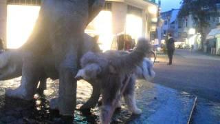 Juppies Meinung zum Schweinebrunnen Bad Oeynhausen Hund Bearded Collie