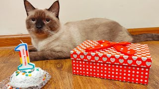 One Old Year Siamese Cat's Birthday