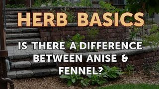 Is There a Difference Between Anise & Fennel?