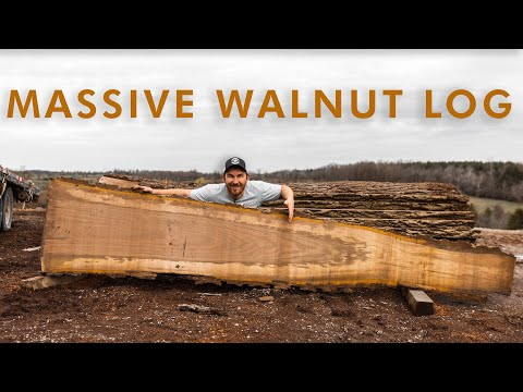 Woodworking Life - Saw Milling A HUGE Walnut Log At Legacy Lumber