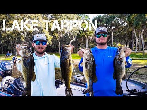 Catching Big Fish On Lake Tarpon (Tournament Video!)
