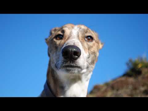 Почему собака отказывается от еды и сильно похудела причина?
