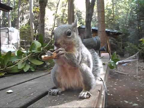Rockie the Squirrel's First Music Video