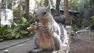 Rockie the Squirrel