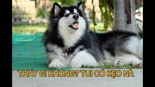 Những chú chó dễ thương và hài hước - cĮip những chú chó đáng yêu
