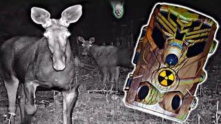 ✅Что засняли ФотоЛовушки в Чернобыле ☢ Скрытое наблюдение за сталкерами в Припяти ☢ Ловим вандалов