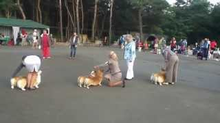 Corgis In Nightingale Land - 2013 / Couple Class